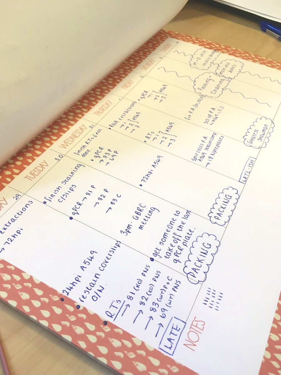 Photo of a weekly desk planner, it displays general tasks that need achieving on what day. The planner has days of the week in white columns and is placed on top of a boarder which is pink with beige raindrops.