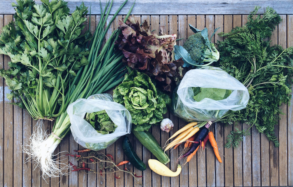 transition-farm-veg.jpg