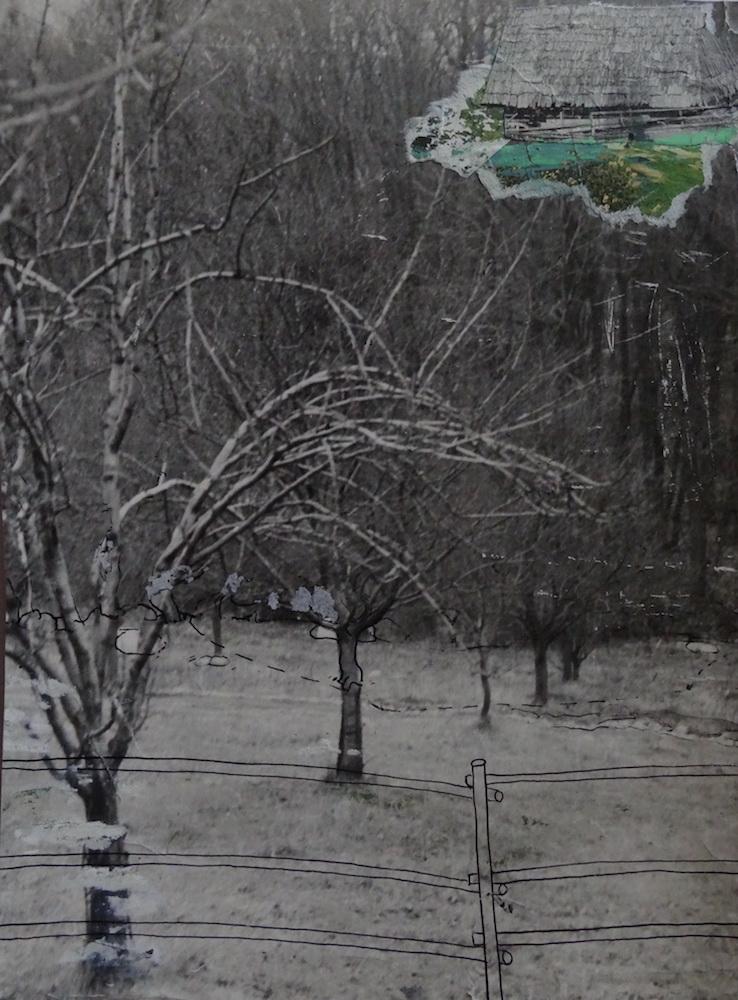 1979, ZOO začiatky, komb tech na fotografii, 25,5x18,5 cm