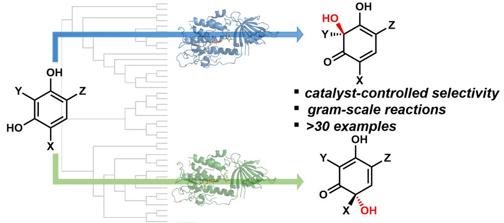 monooxygenases1 TOC.png