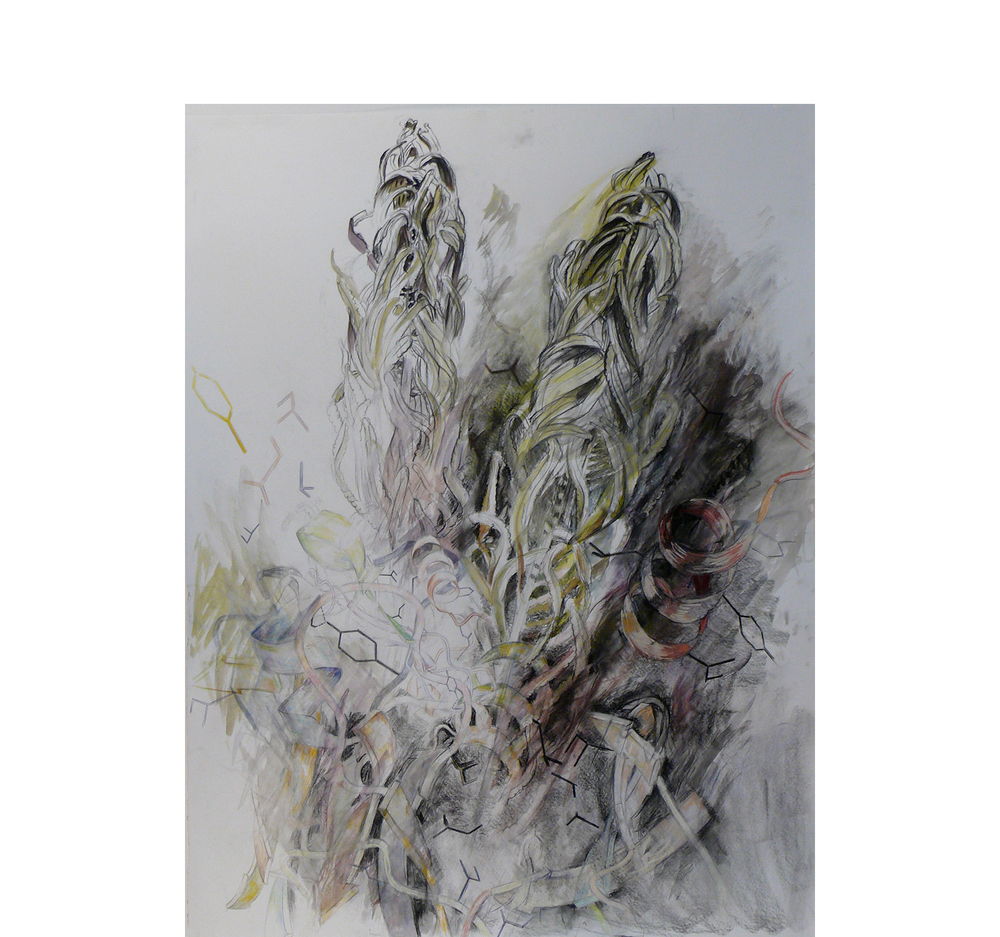 Fern Diagram, 2014, Charcoal, pastel, ink on paper. 55 x 43