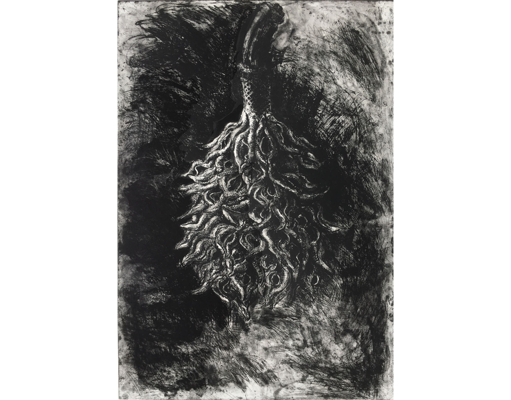 Magnolia Seedpod I, 2006, Etching. 24 X 35