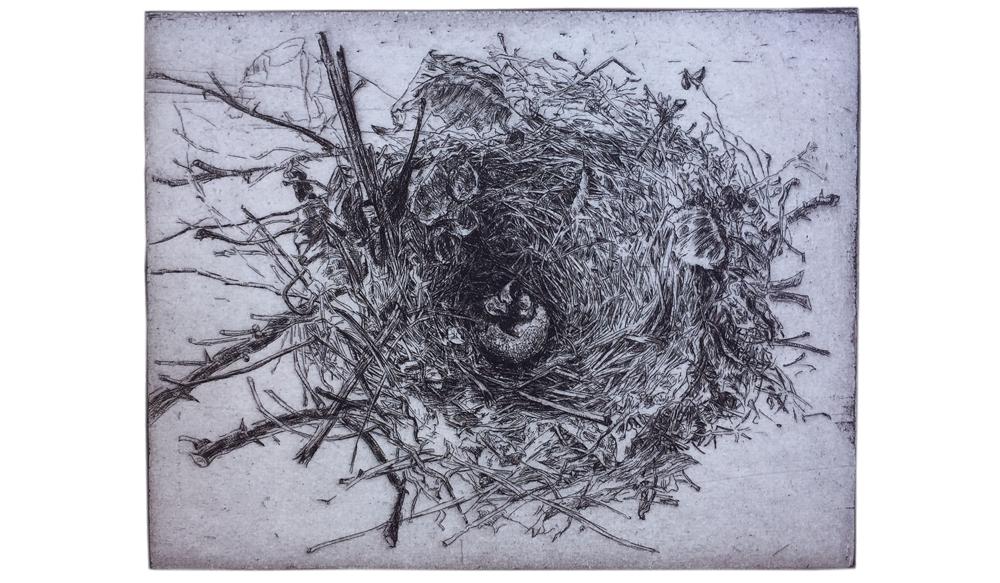 Cardinal Nest, 2002, Etching. 6 x 7 ½