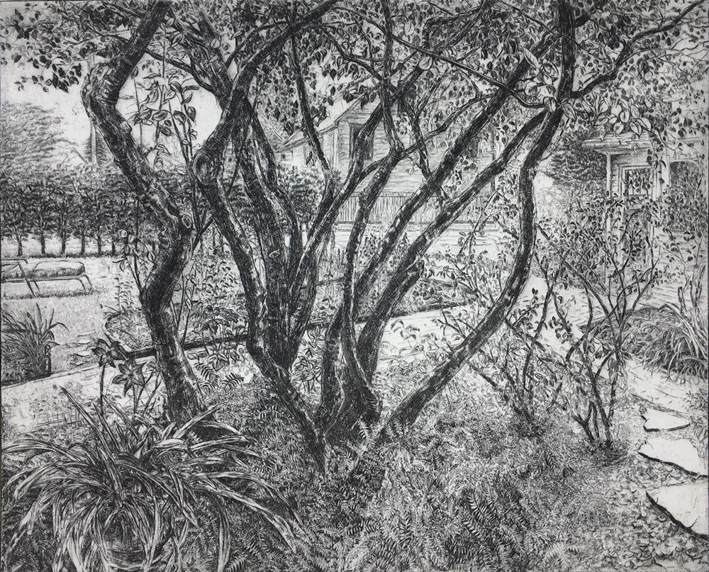 "Serviceberry Tree, 2018, Etching, 16"" x 20"