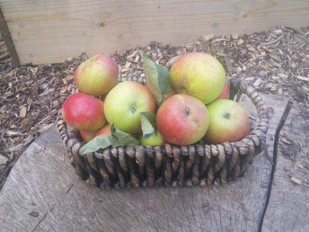 Seasonal fruit harvested or gifted make excellent preserves.