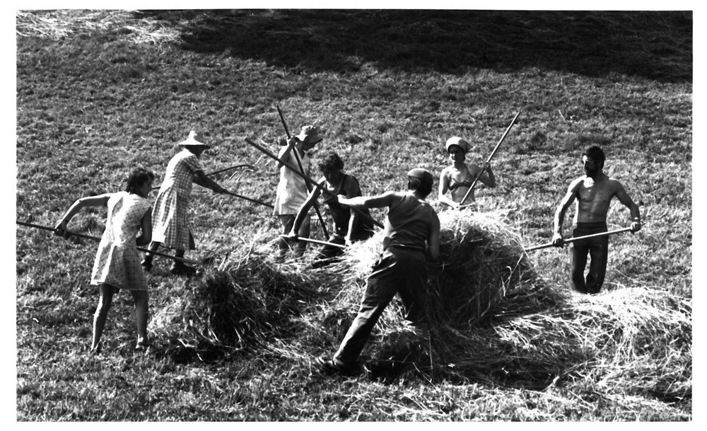 Haymaking-Quincy.jpg