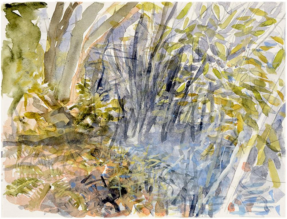 Ballynahinch-Woods-(watercolour).jpg