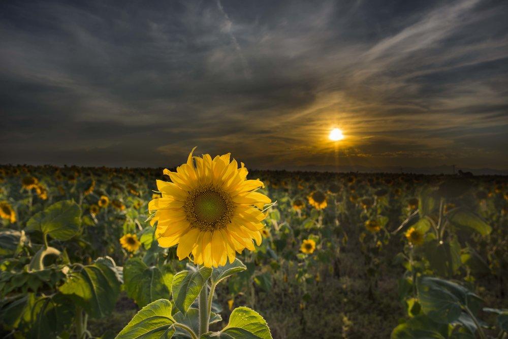Sunset Flower Smaller.jpg