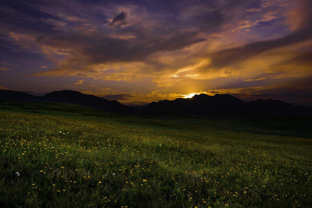 Sunset with Wildflowers.jpg