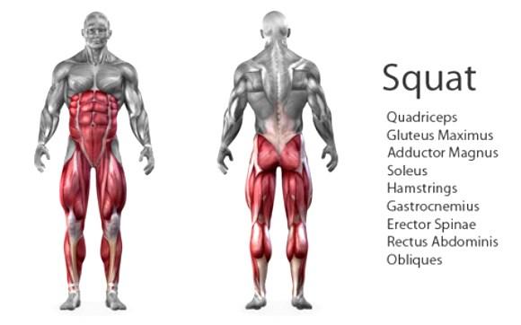 squat-graphic