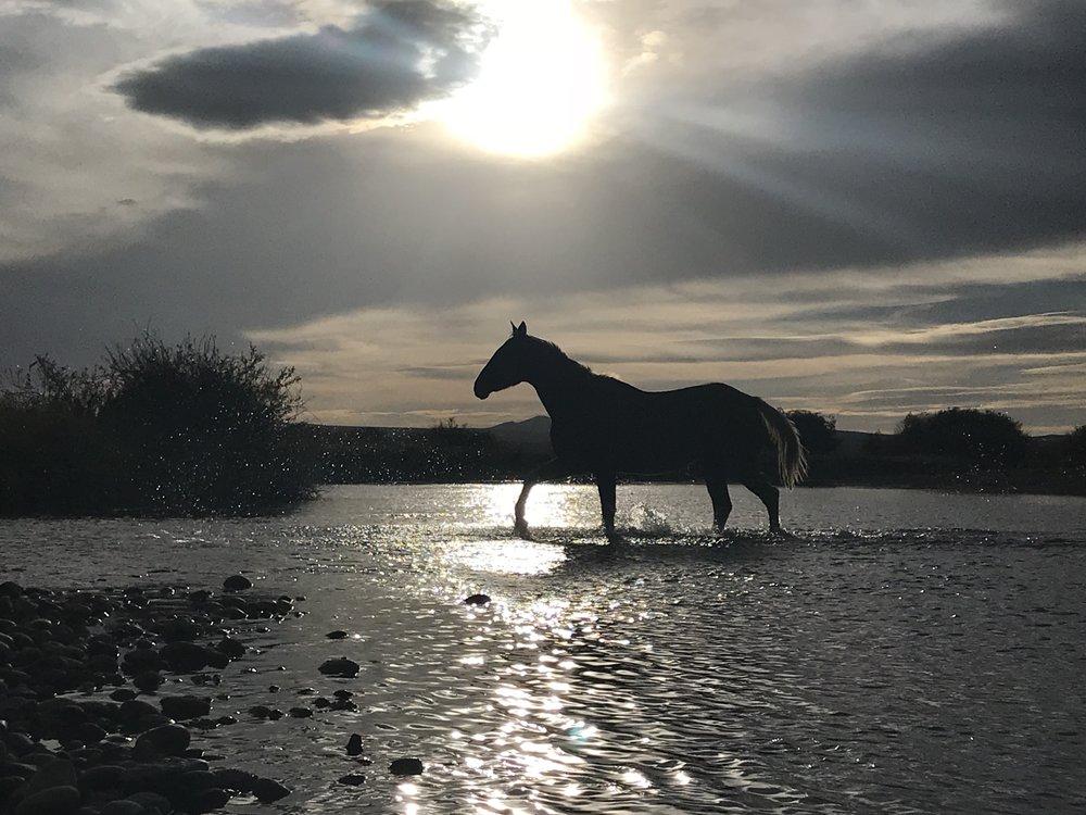 Horse Crossing Water.jpg