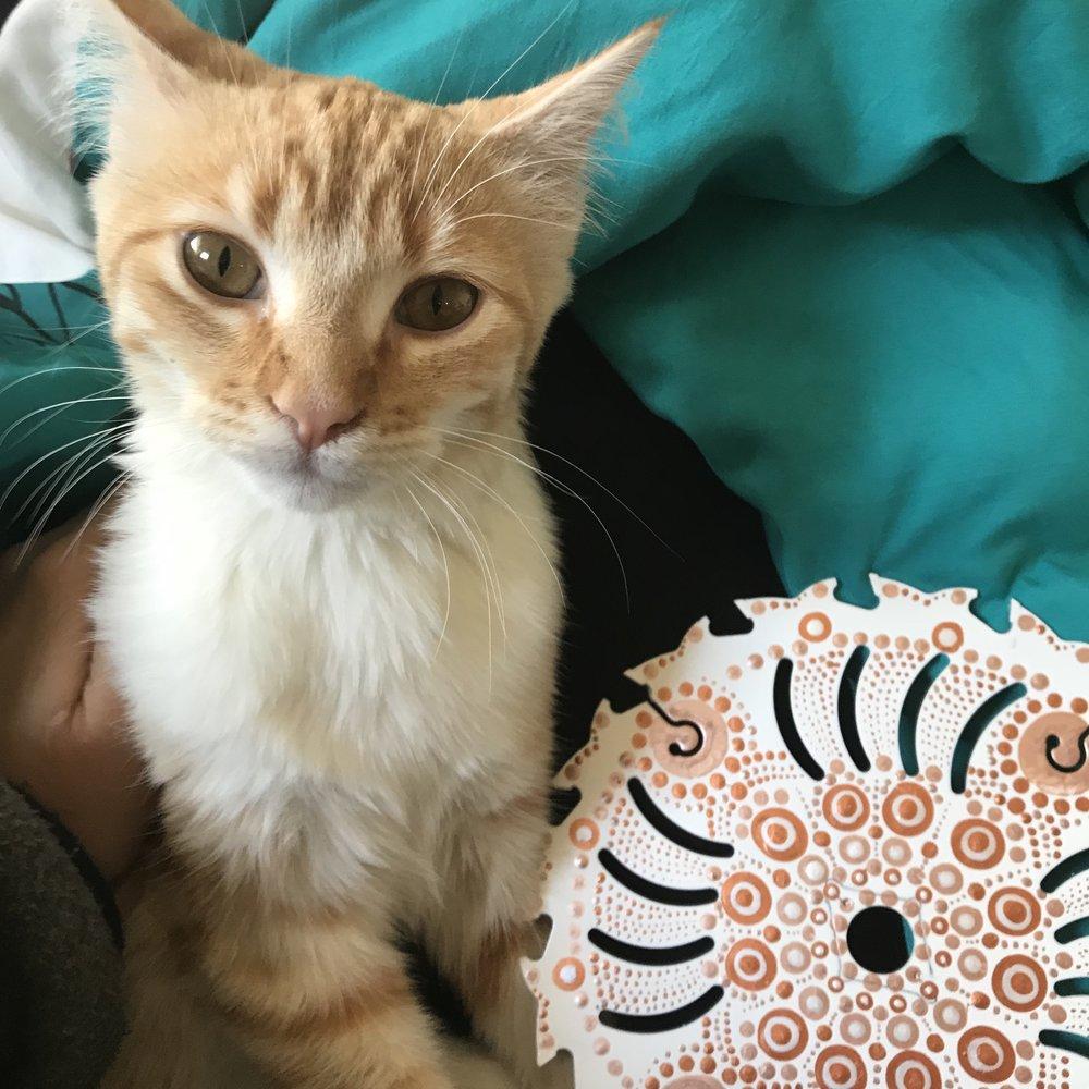 Cat Mandala.jpg