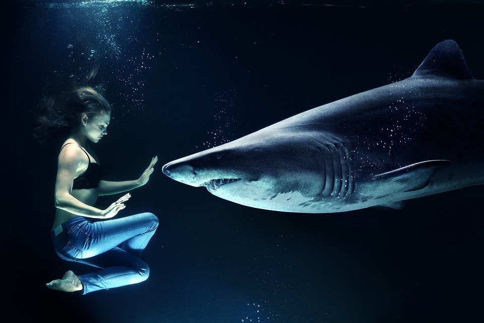 3. Sharks Usually Don't Win Cases - If TV legal dramas have taught us anything, it's that litigation is won by lawyers who shoutdown their opponents and eventually make witnesses break down into puddles of tears.Much of the grandstanding and posturing is usually only an act to lure the client in. Judgesand other attorneys are not taking them very seriously. In fact, the most aggressive lawyerswill end up costing you the most money. The key factor here is simple: Do not go lookingfor the nastiest shark.