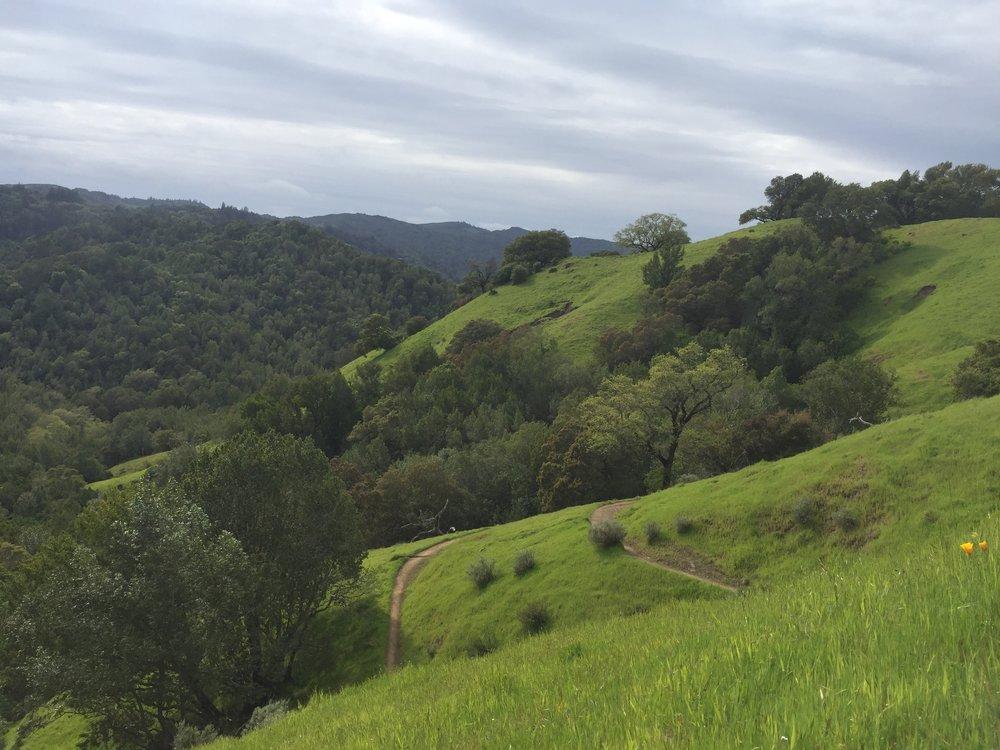 fairfax-landscape - 9.jpg