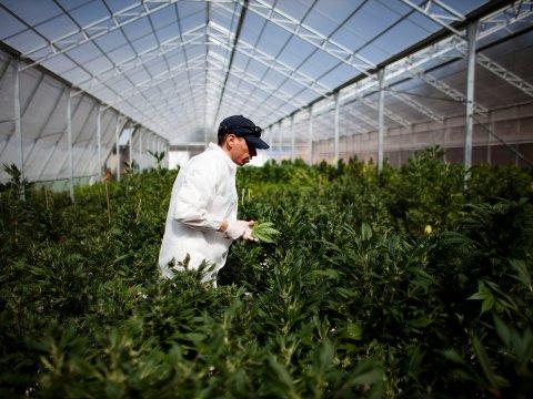 marijuana_grow_room.jpg