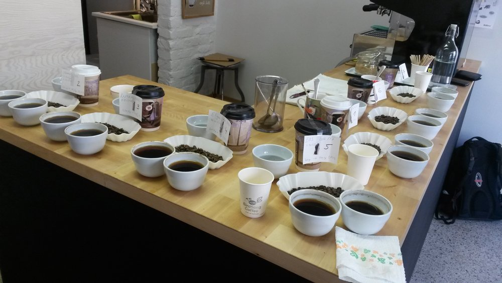 Cupping session of Ugandan coffee samples at the BirdSong Coffee, Prague.