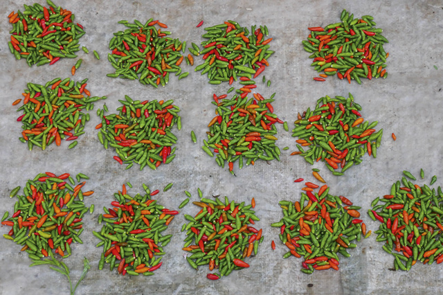 Laos locally grown chillies