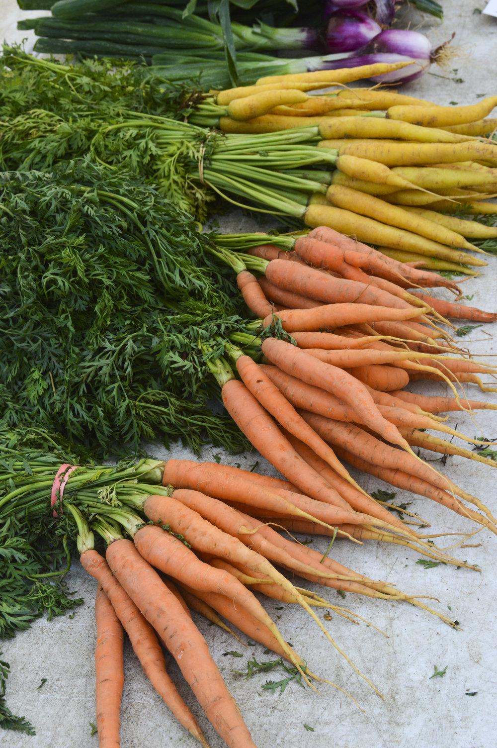 Carrots by Daniela Maria Castillo Frech