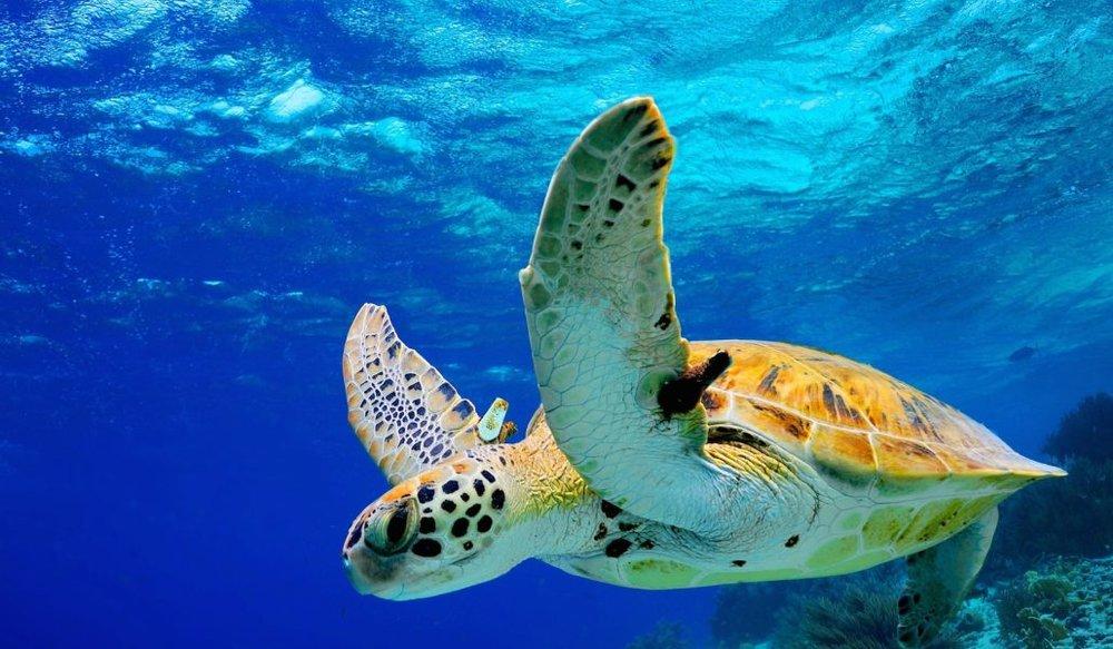 Sea-Paradise-Turtle-1.jpg
