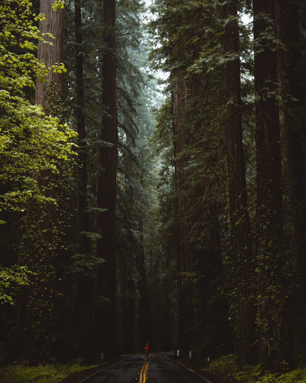 Avenue of the Giants, Redwood National Park