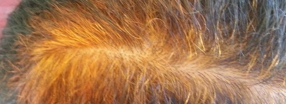 Cover Grays In Dark Hair With Henna Indigo Natural Hairevolution