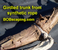 rope-girdled-trunk.jpg
