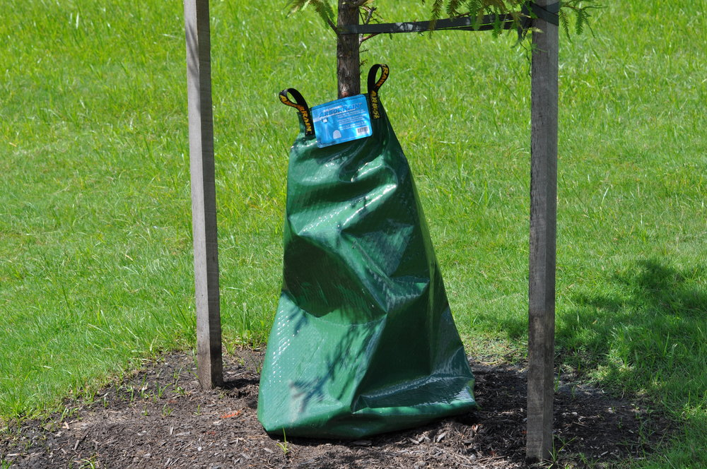 2 stake method - Another method uses 3 short stakes spaced evenly around the base of the tree with guy wires running up around the first branch. Use sections of old garden hose to protect the tree from wires and rope. Purchase a tree watering bag