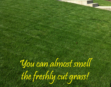 fresh-cut-grass.jpg