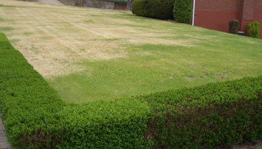Winter blahs - Zoysiagrass still showing its straw brown color in early Spring on a northeastern US home lawn. Its brown dormant period is too long for many homeowners.