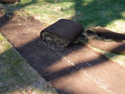 Sod cutting in progress with old thatch pieces rolled-up.