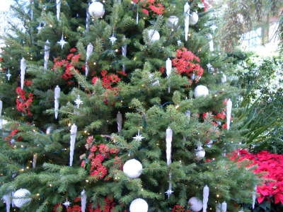 Christmas-Tree-Longwood.jpg