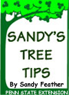 SANDY'S TREE TIPS