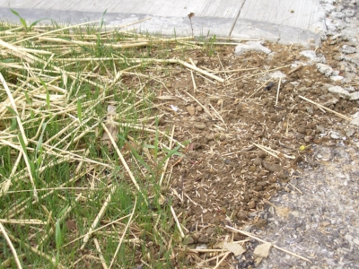 Crabgrass controls can also affect grass seed growth, so always read the label.