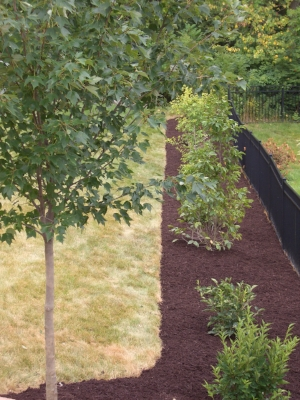 Newly planted trees and shrubs need extra care during their first summer.