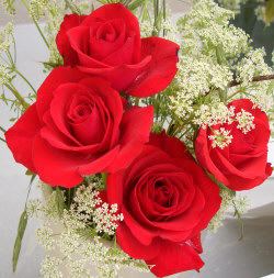 Red Rose - Red roses are given to express beauty, love and respect.