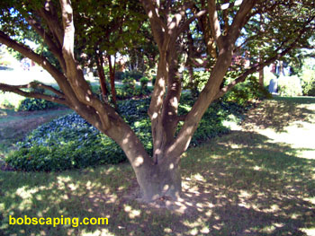 The area beneath a tree can be very dry as well as too shady for a good lawn. Thin tree branches to allow more sunlight to reach the lawn. Consider using mulch or ground cover in extremely shady areas.