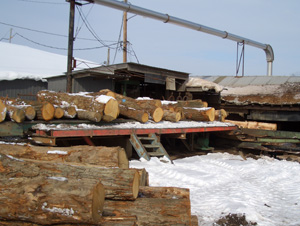Staging area - Logs are lined-up on a platform for debarking.