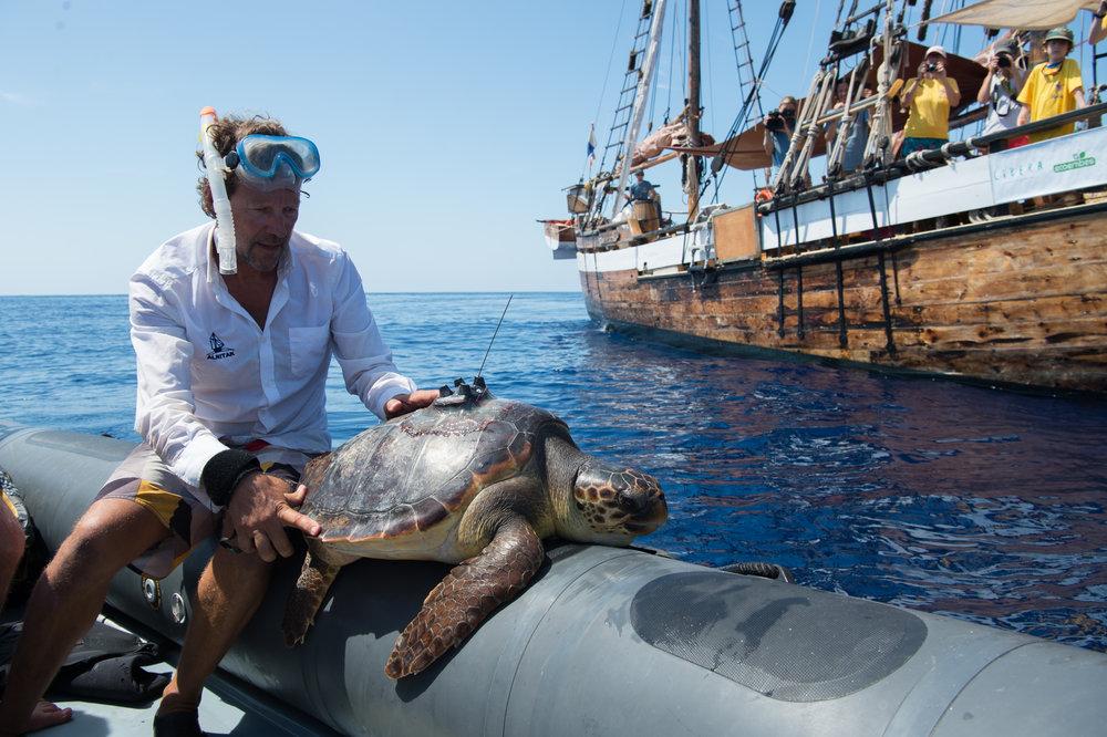 Turtle411 (81 von 92).jpg