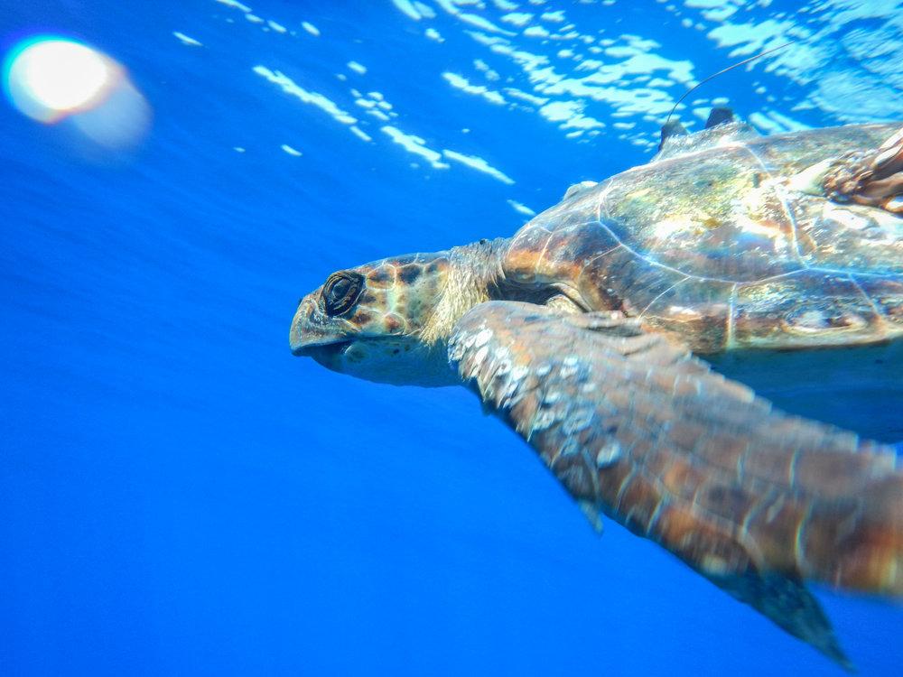 Turtle416 (51 von 68).jpg