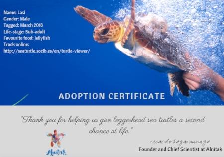 El paquete de adopción