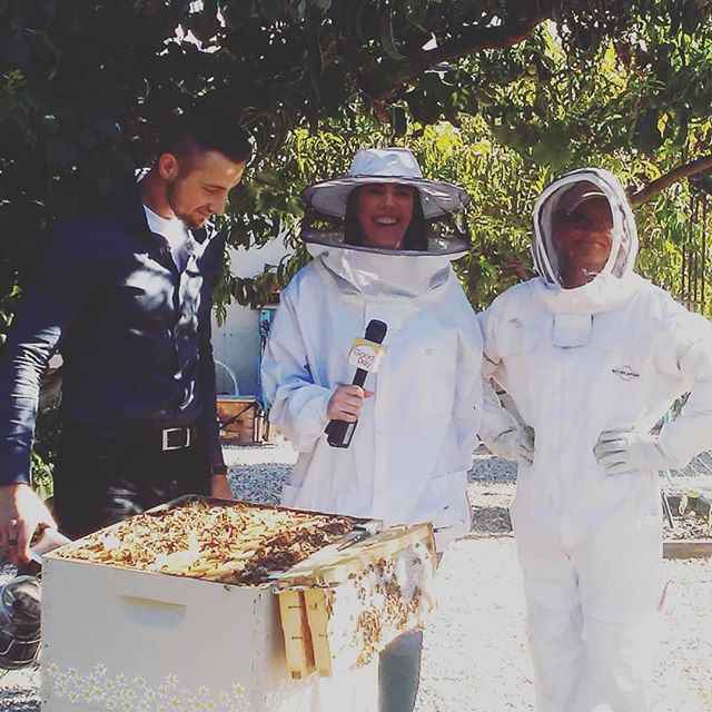 Our bee keeping workshop was previewed on Good Day Sacramento this morning!  #beekeeping #bees #workshop #honey #harvest #Lodi #local #gooddaysacramento #visitlodi #California #getstuck