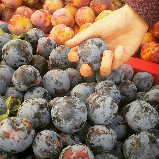 Hand picked fruit from Lodi's Farmers's Market will be served on the VIP tables this Saturday's show with Complicated Animals!!! 2 tables are still available. Reserve one now at www.themiddlec.org #viptables #livemusic #indienova #famersmarket #localproduce #plums #pluots #lujanfarms #California #Lodi #visitlodi #getstuck