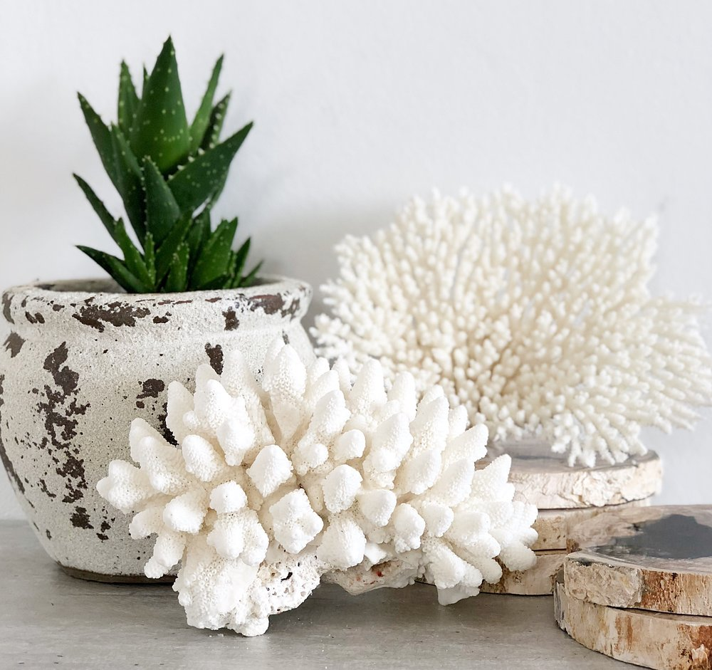 We have a stunning selection of natural coral pieces