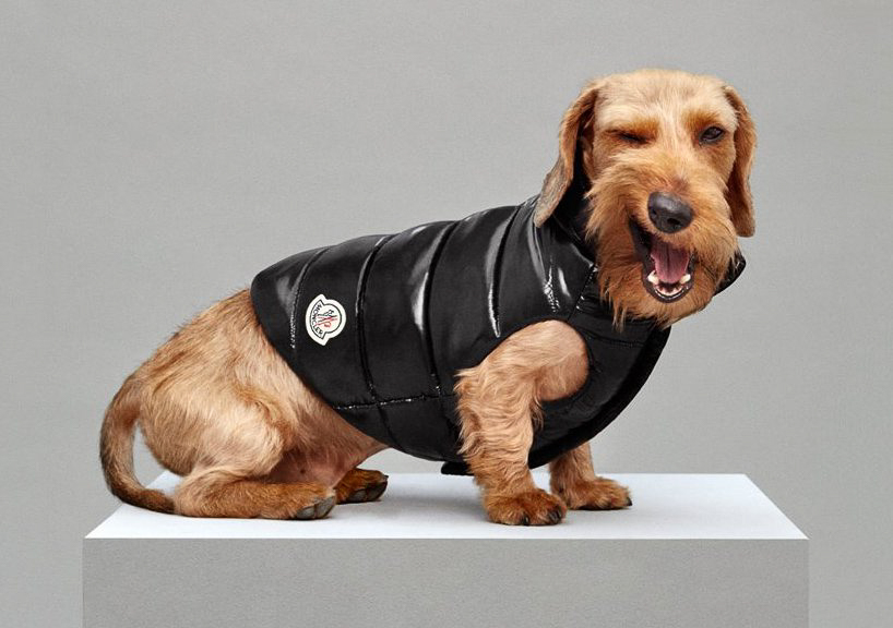moncler-dog-jackets-GuildMagazine05.jpg