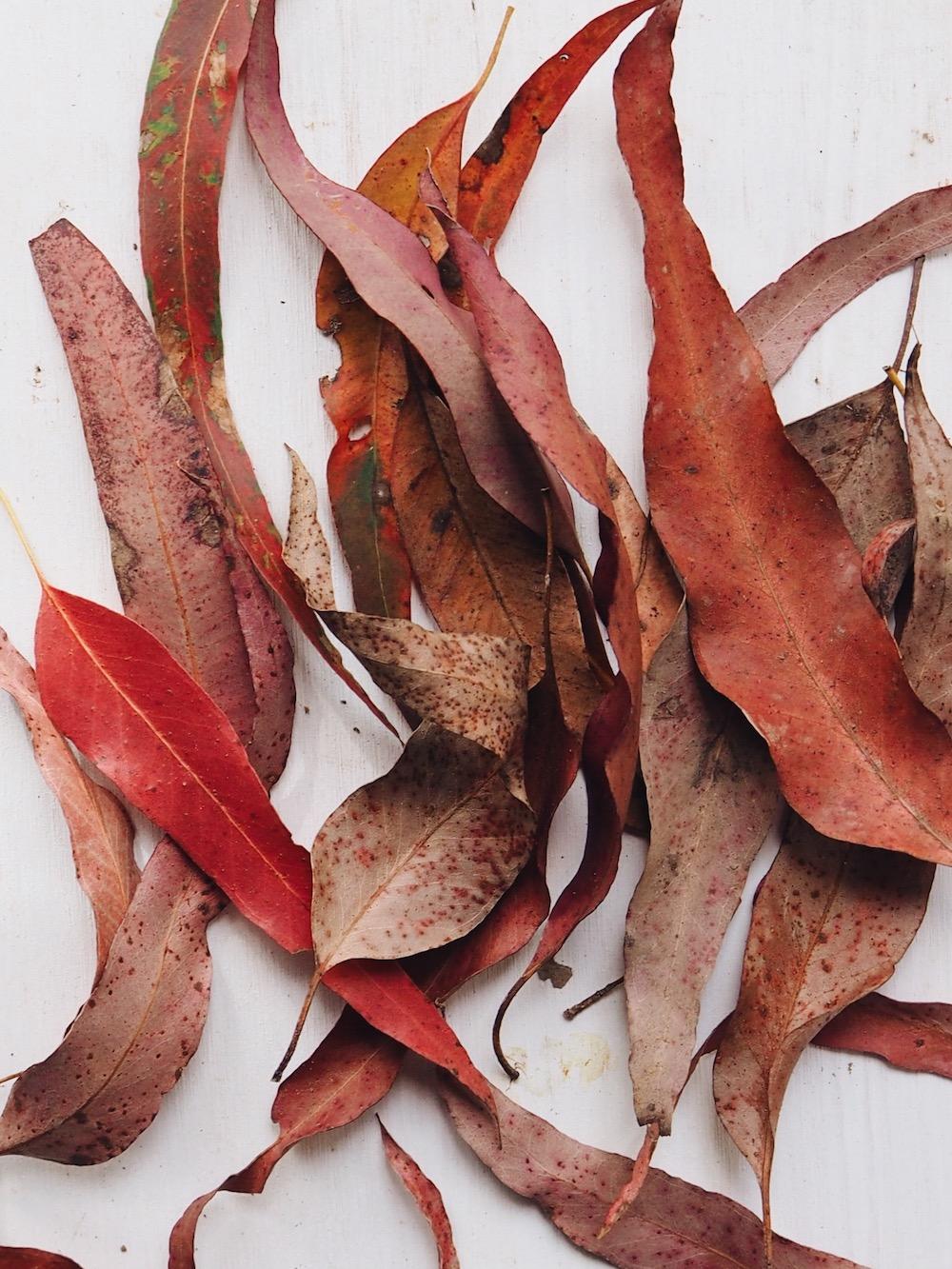 Ellie Beck Petalplum leaf piles.JPG