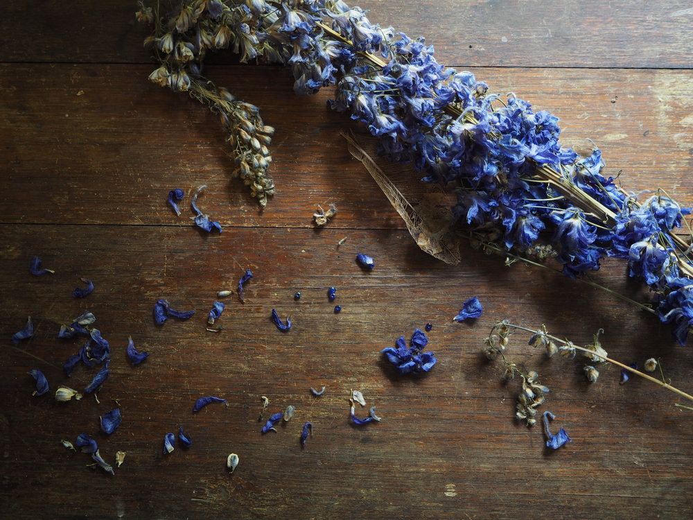 Ellie Beck dried blue flower head delphinium on wooden table.jpeg