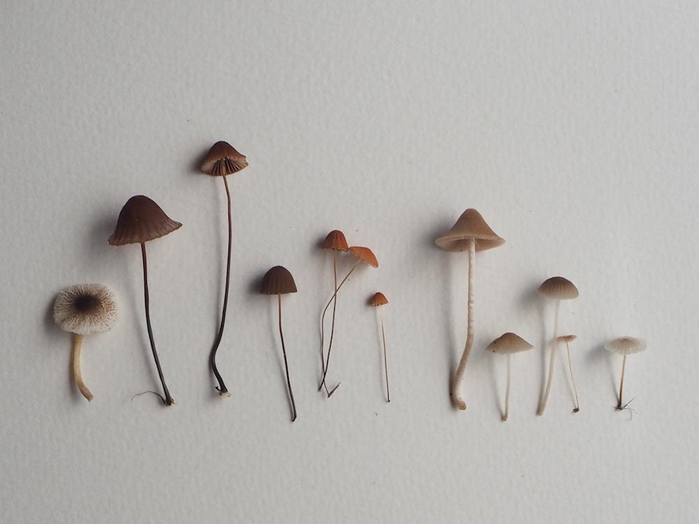 Ellie Beck delicate mushrooms in a row.jpeg