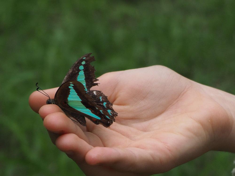 Ellie Beck blue butterfly in hands.jpeg