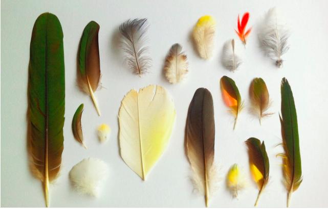 feathers Ellie Beck Petalplum