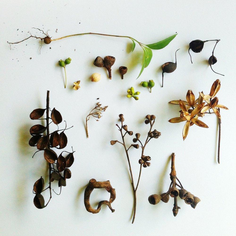 Ellie Beck Petalplum forest treasures seedpods.jpg
